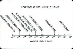 Cohen: Human Magnetic Field Strengths